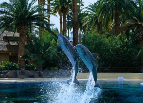 The Mirage - Dolphin Habitat